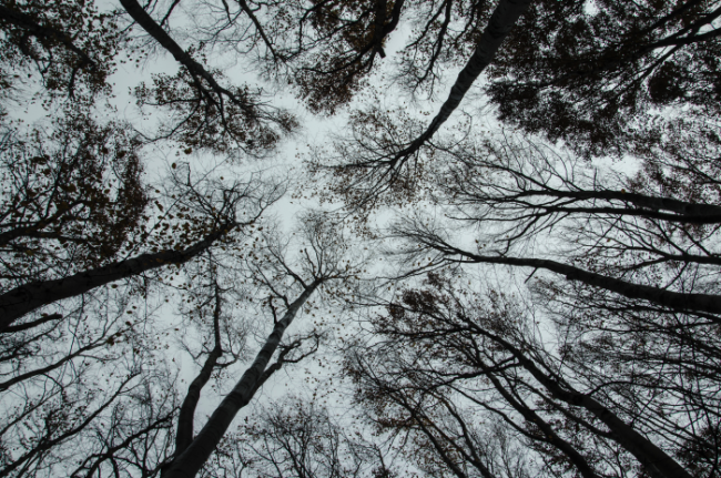 Photo looking up at trees